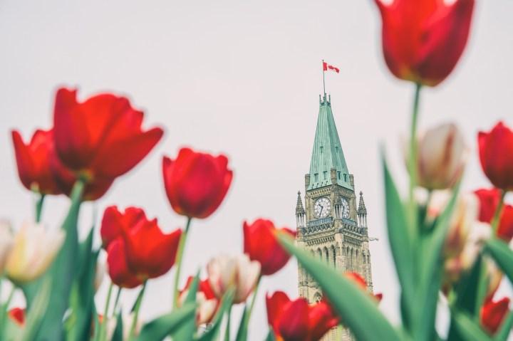 Festival des tulipes à Ottawa