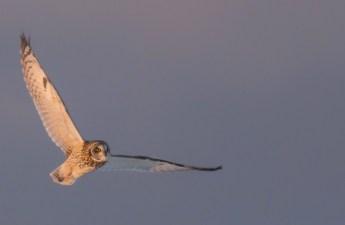 bird in flight photography tips
