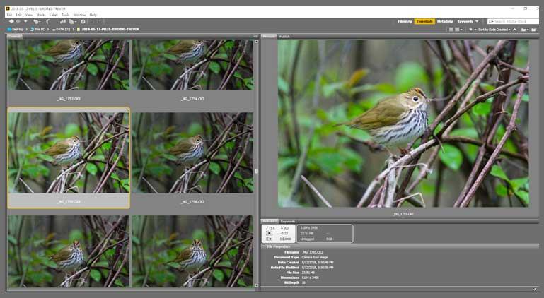 bird photography post processing