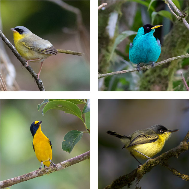 Costa Rica bird photography