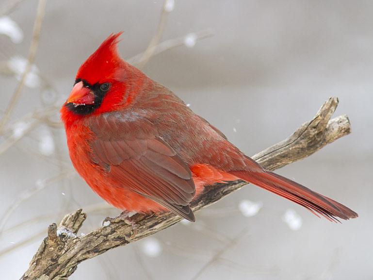 bird feeder in your backyard