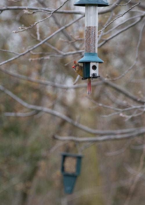 bird photography at bird feeder