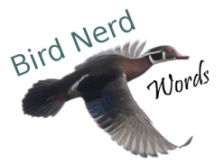 Bird Nerd Words