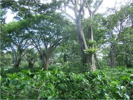 Shade Grown Coffee at Gaia