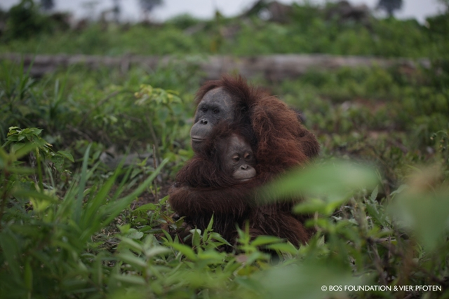 Reflecting on 5 Years being Palm Oil Free