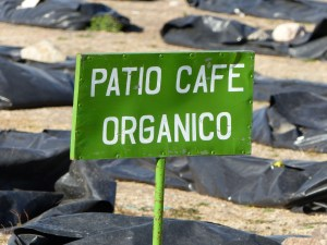 Certified Organic Coffee is a Big Deal!