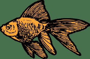 goldfish-32441_1280