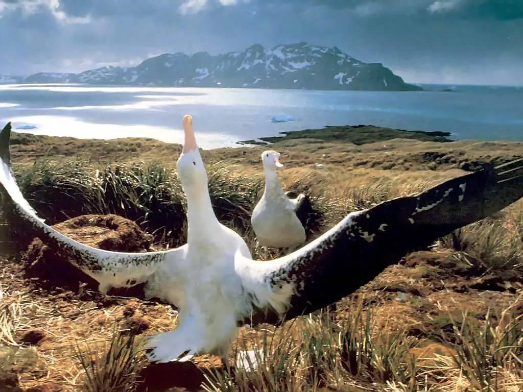 Bird with largest wingspan - Bird wingspan list