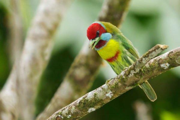 اجمل 10 طيور في العالم