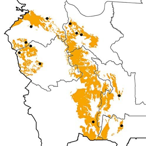 Agriornis albicauda