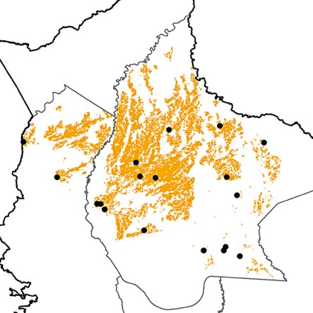 Coryphaspiza melanotis