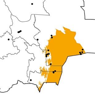 Anas bahamensis
