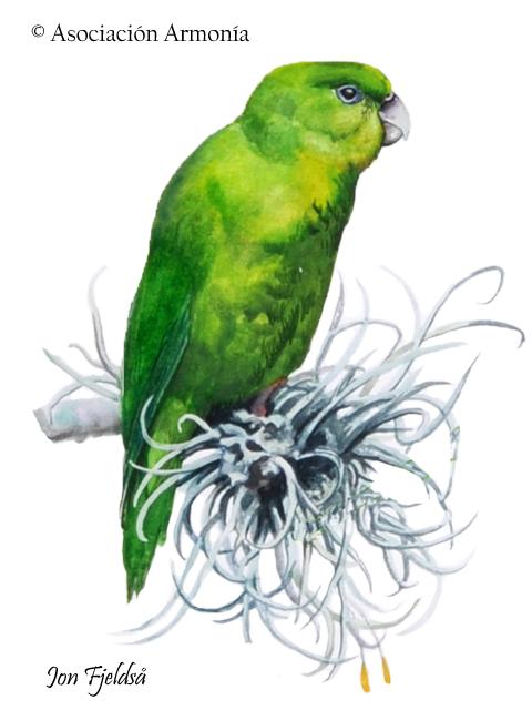 Andean Parakeet (Bolborhynchus orbygnesius)