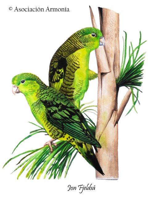 Barred Parakeet (Bolborhynchus lineola)