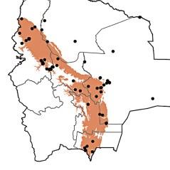 Euphonia cyanocephala