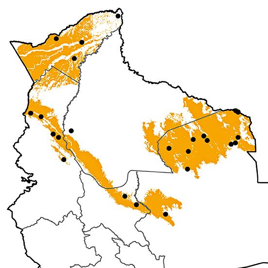 Hylopezus berlepschi