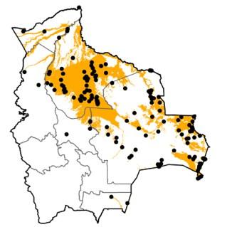 Jabiru mycteria