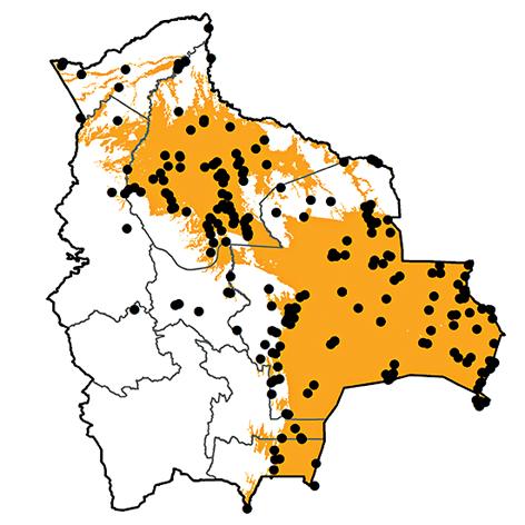 Jacana jacana