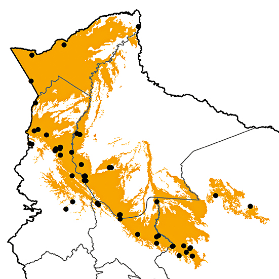 Piculus leucolaemus