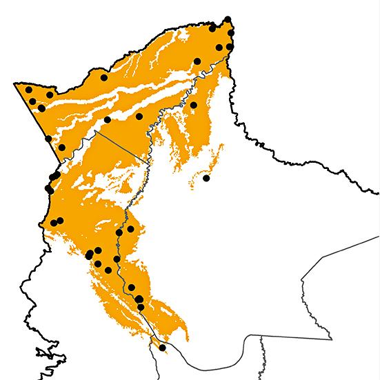 Pteroglossus azara