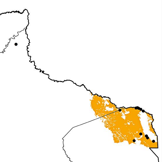 Pteroglossus bitorquatus
