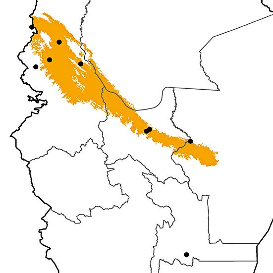 Steatornis caripensis