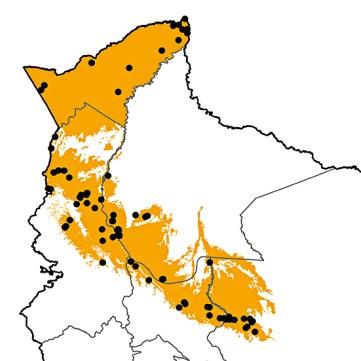 Tangara schrankii