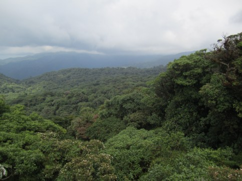 The forest at Santa Elena