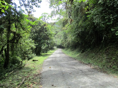 Some of the best birding is along the road in Tapanti National Park, Costa Rcia