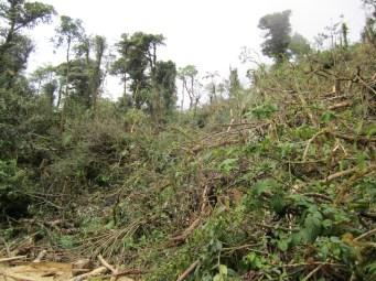 Deforestation on Cerro Santiago
