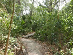 The trails at Tayrona National Park