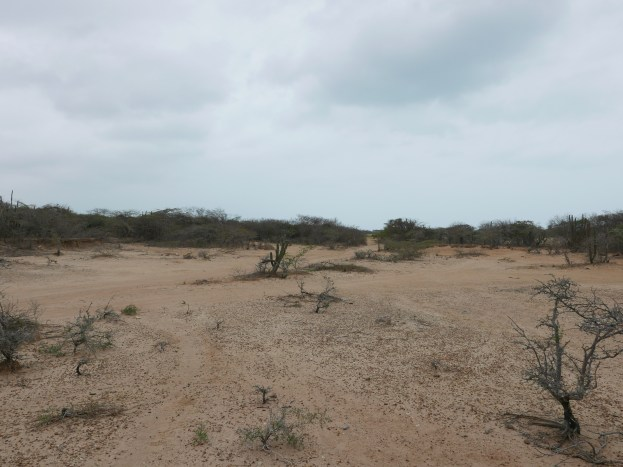 The Guajira landscape near El Remanso