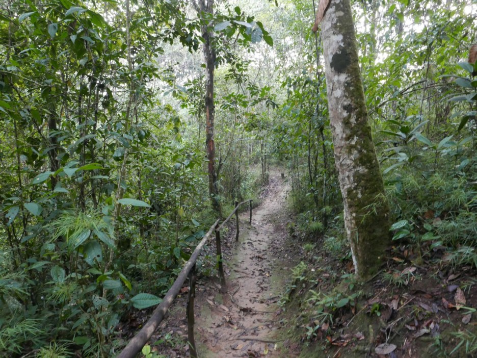 Forest trail at Recurve-billed Bushbird Reserve