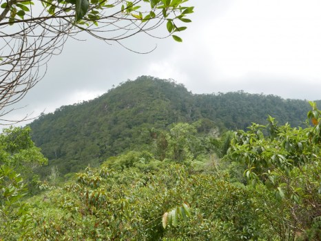 View of the forest at Pauxi Pauxi