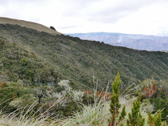 A view of the landslide areas on Cerro Mongus from which to scan for Chestnut-bellied Cotinga