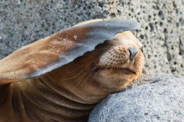 Sea Lion trying to get some shade