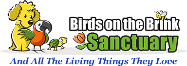 Birds on the Brink Sanctuary