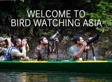 Asia Bird Watching