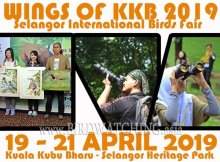 Wings of KKB 2019