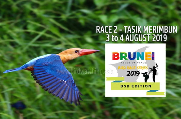 Brunei Bird Race Series 2019 Tasek Merimbun Race 2
