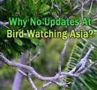 Website for Bird Watching Asia