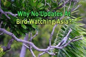 Website for Bird Watching Asia