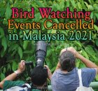 Malaysia Bird Watching Events Cancelled
