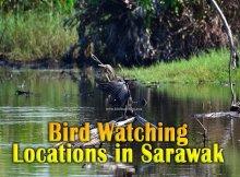 Sarawak Bird Watching Locations