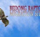 Kedah Raptor Site Bedong