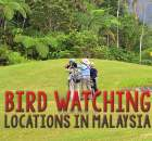 Malaysia Bird Watching Locations