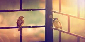 Larkwire Review: Best Bird Watching App