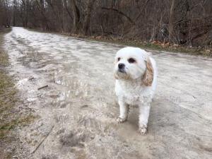 February 2017 Chloe Walk