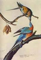 Tips for Bird Watchers