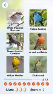 Best Birding Apps